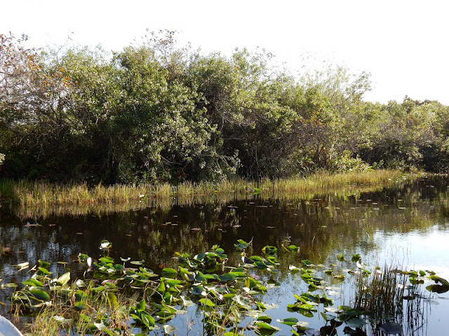 Everglades, Florida, US, Elisa N, Blog de Viajes, Lifestyle, Travel