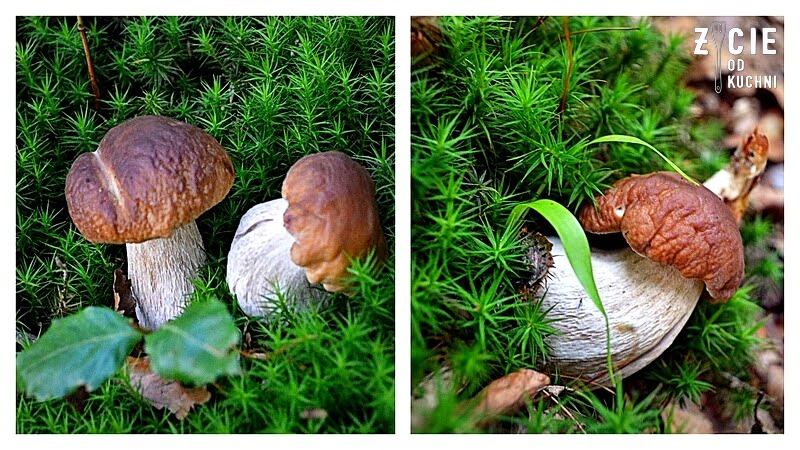 mrozenie grzybow, jak mrozic grzyby, grzyby lesne, grzybobranie, sezon na grzyby,
