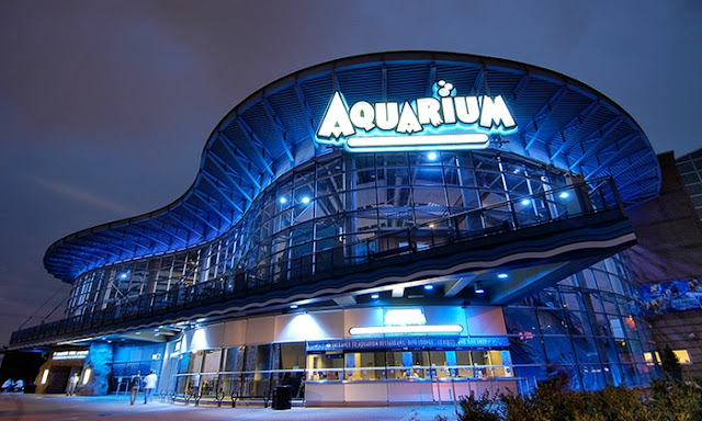 Best Aquariums in the USA: Denver Downtown Aquarium