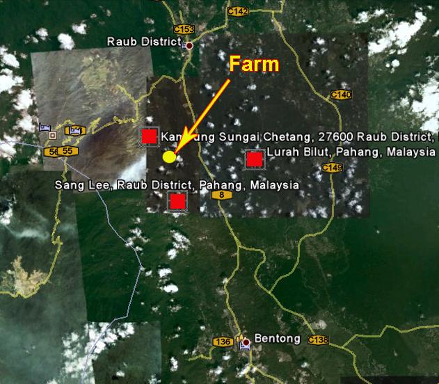 Durian Info: Durian Orchard Near Bentong