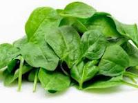 Kandungan Nutrisi, Manfaat dan Cara Mengolah Bayam