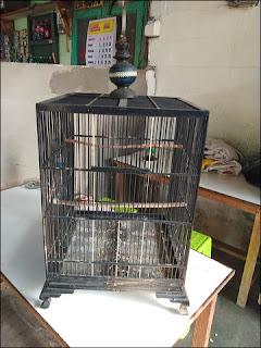 SB-45 Bird Farm - Penghobbi dan peternak burung di Surabaya