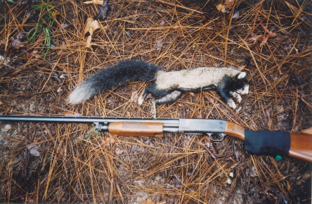 N.c. Squirrel Season This is what is called a