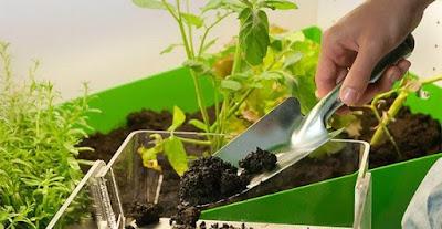 glossario-vocabolario-termini-inglesi-coltivatori-grower