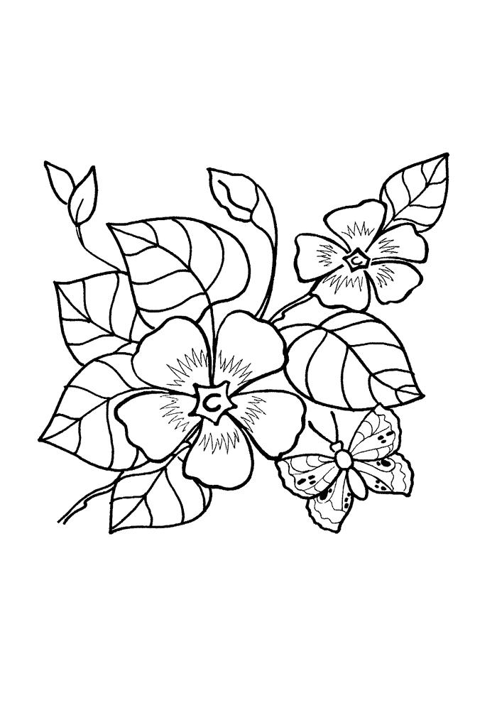 Раскраски деткам: Раскраски цветы - Лесная фиалка