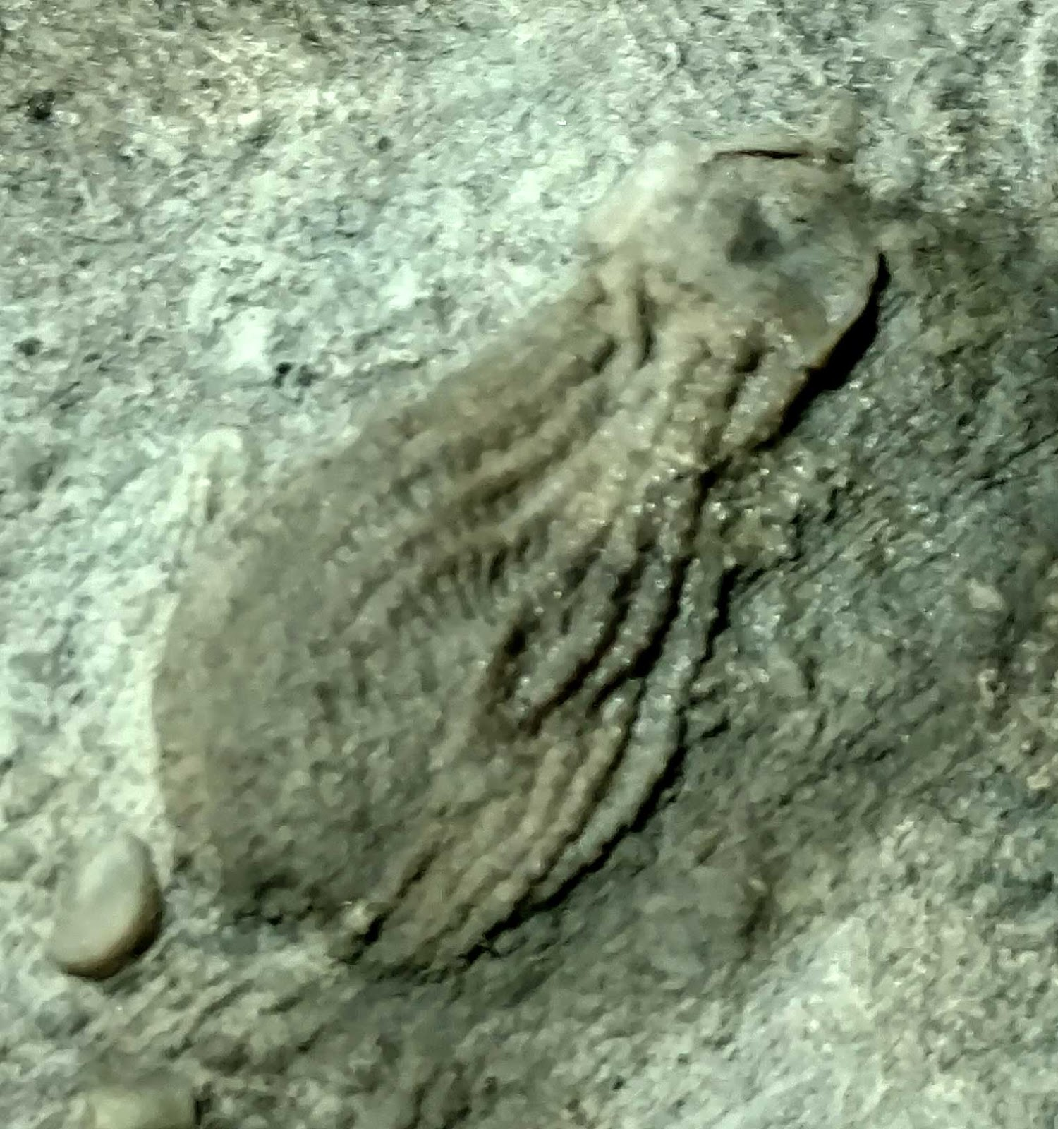 Fossil dating in hindi