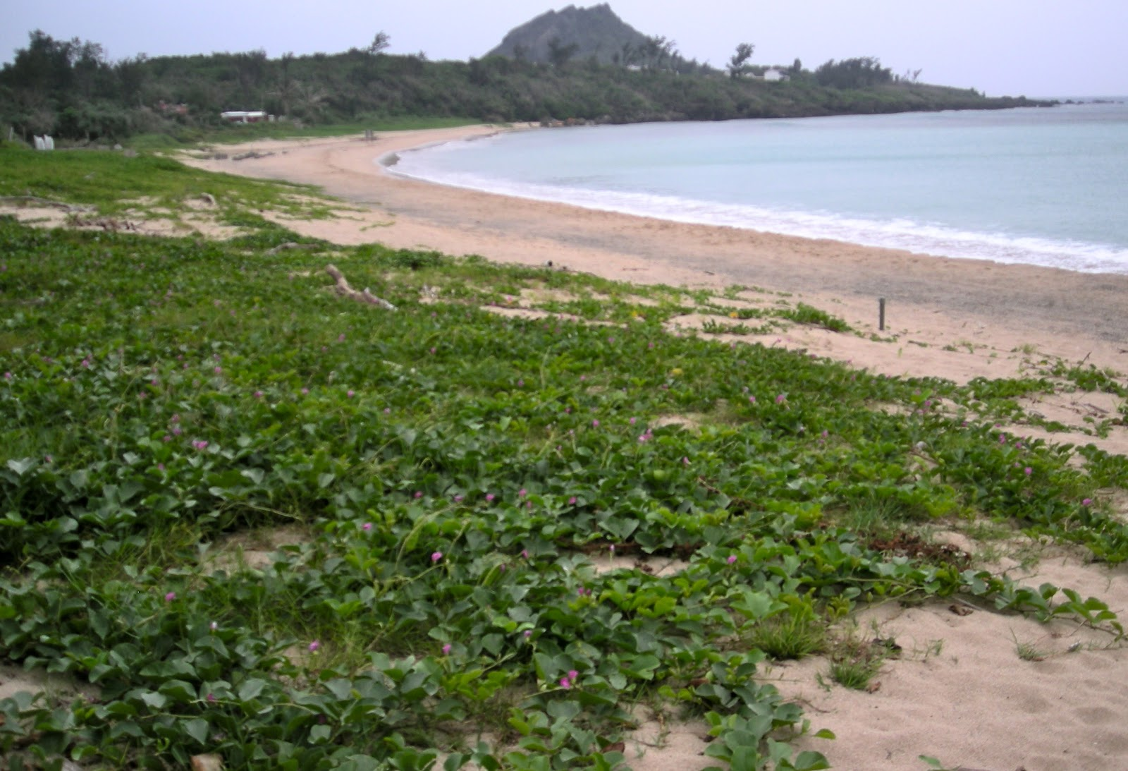 Image result for panama unknown beach with shrubs