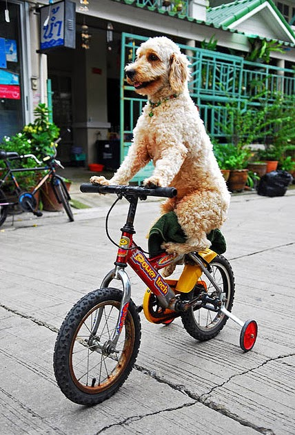 Cranky Fitness 23andme Genetic Testing What S The Deal: Cranky Fitness: Bike Safety: Who Cares?