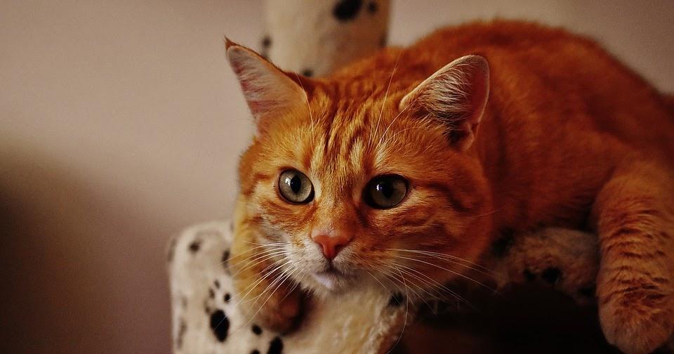 Come eliminare le macchie e l 39 odore di urina dei gatti dal pavimento donneinpink magazine - Perche i gatti fanno la pipi sul letto ...