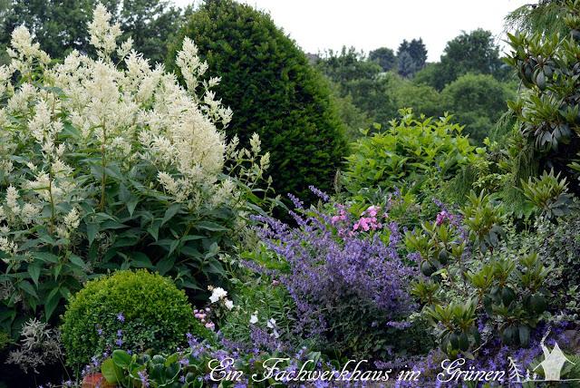 Alpenknöterich, Katzenminze, Geranium, Glockenblumen