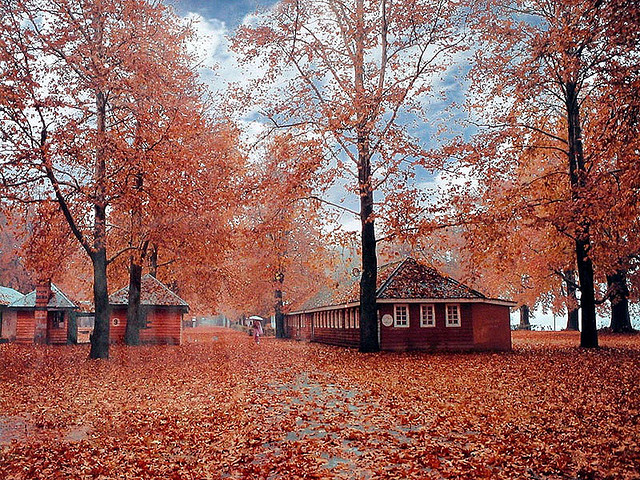 Kashmir autumn wallpaper fall leaves colors