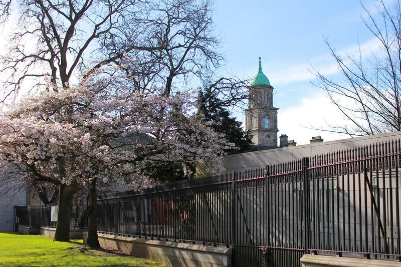 vue d'un cerisier en fleur a coté d'un magnifique bâtiment public