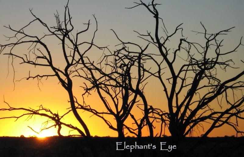 Kgalagadi sunset