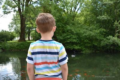 Fische im Teich