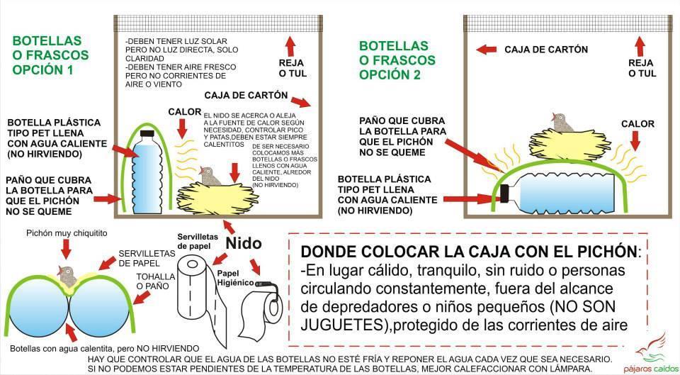 c099d04641fc Alimentación del pichón recién nacido