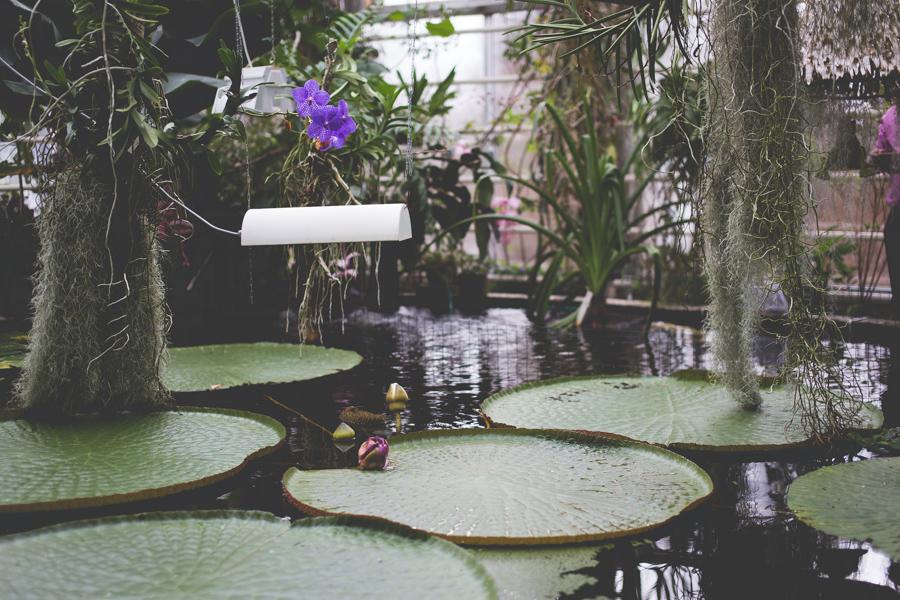 Turun yliopiston kasvitieteellinen puutarha on viihtyisä ja monipuolinen retkikohde kaiken ikäisille. Lue lisää sivustoltamme!