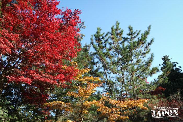 Feuillages d'automne, parc Momijidani, Miyajima, Hiroshima-ken