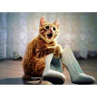 Gambar Wallpaper Kucing Lucu Banget 200012