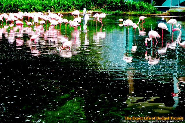 bowdywanders.com Singapore Travel Blog Philippines Photo :: Singapore :: Jurong Bird Park – Where Color Lives