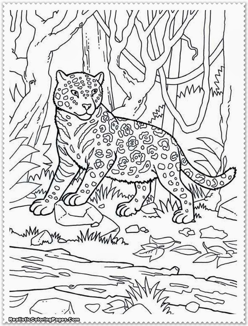 Coloring Pages Animals Realistic : Realistic jungle animal coloring pages