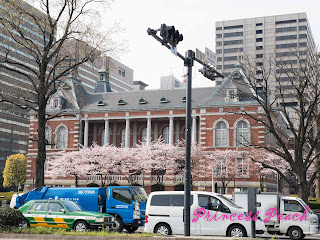 皇居外圍櫻花行道樹