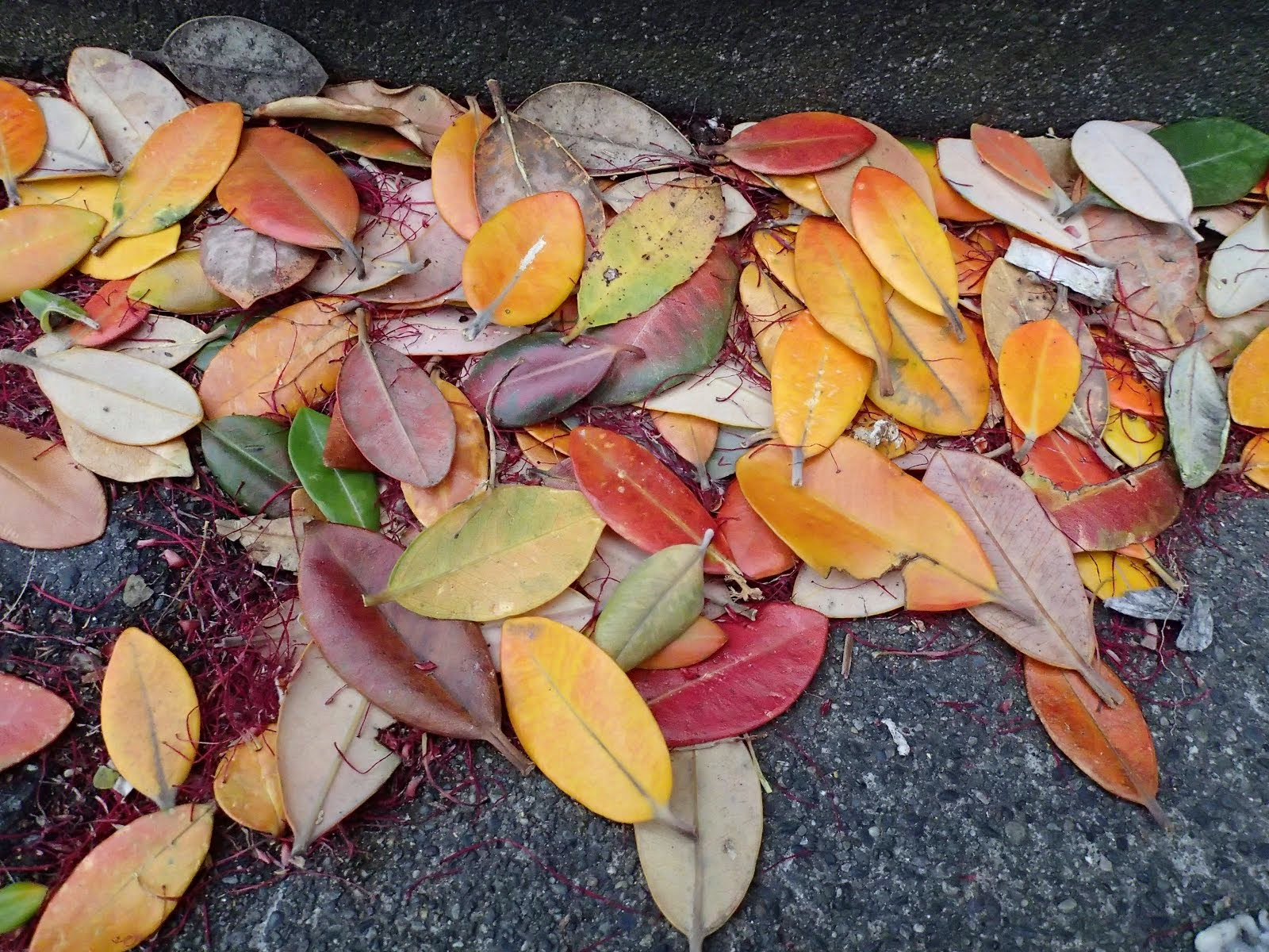 Leaves in the gutter at the railway station