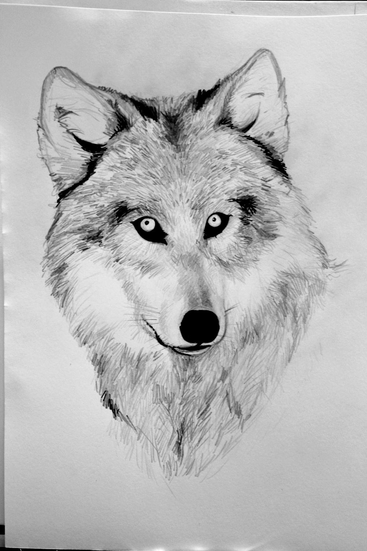 Именем наташа, картинки волка карандашом прикольные