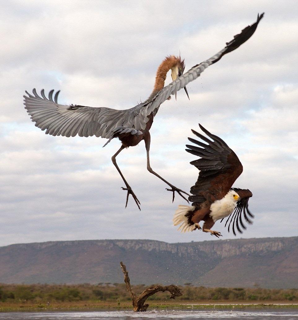 Kung Fu Eagle Style SOMETHING AMAZI...