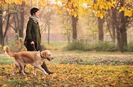 Самоучител: Разходка на кучета навън.