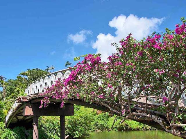 bridge, bougainvillea, wagon wheels