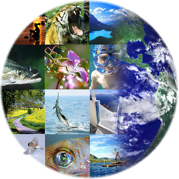 What is biodiversity and why does it matter to us?