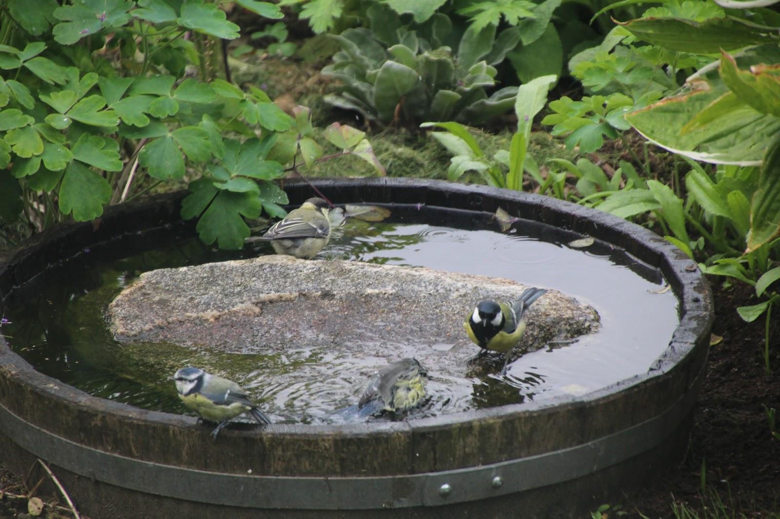 fågelbad