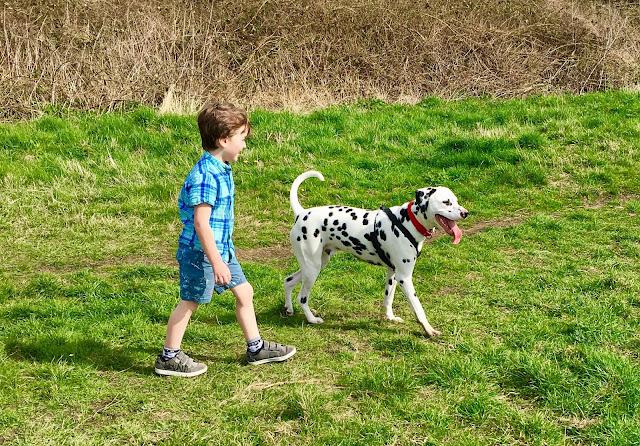 Dalmatian and child