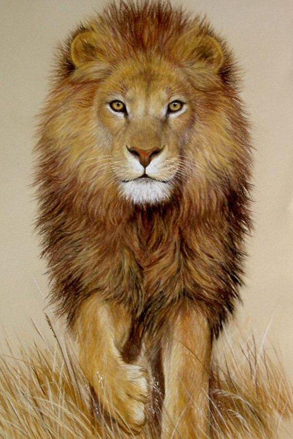 SANGAR !! 30++ Gambar Singa Lengkap - Gambar Foto