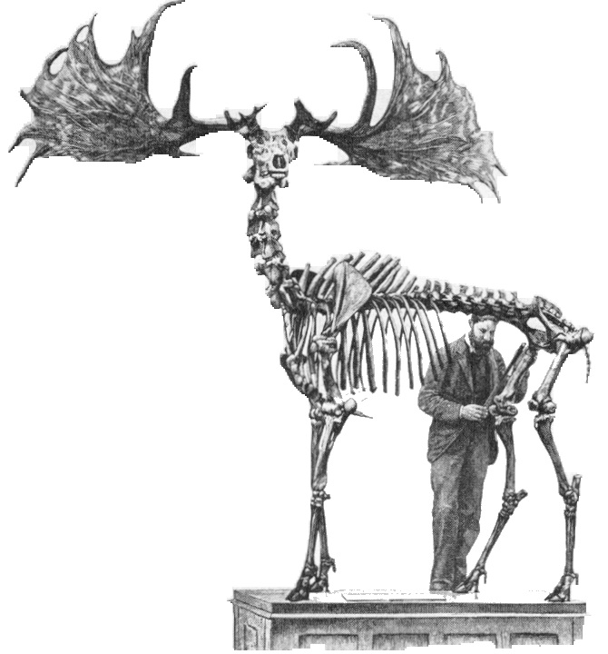 ShukerNature: THE LAST OF THE IRISH ELKS? - INVESTIGATING ...