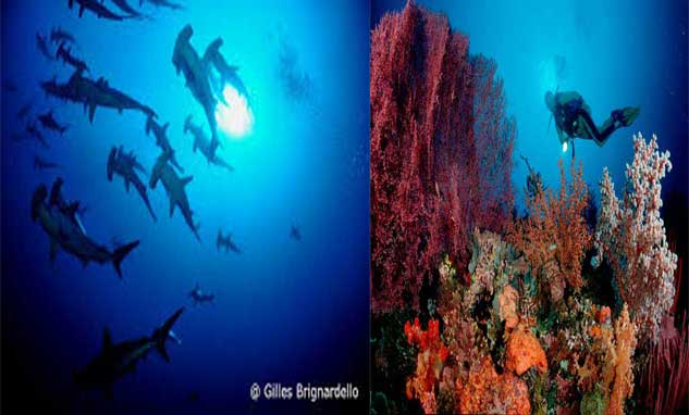 Komodo island diving
