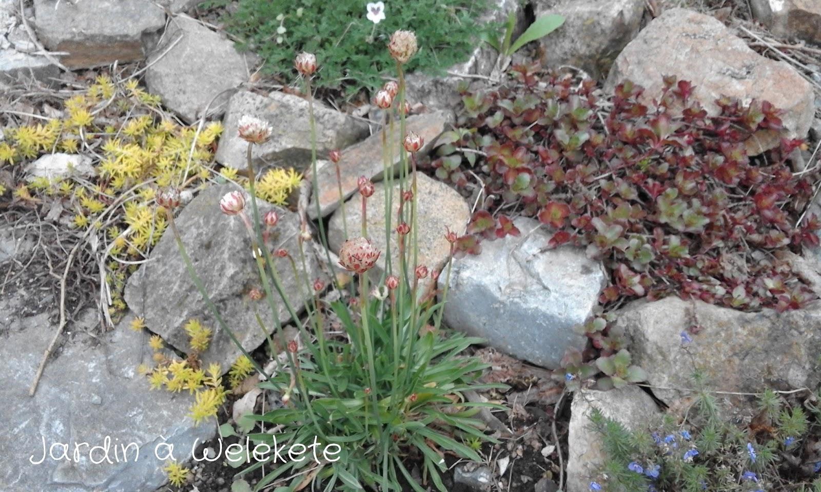 Jardin welekete petit tour au jardin mai 2017 - Petit jardin culinary arts tours ...