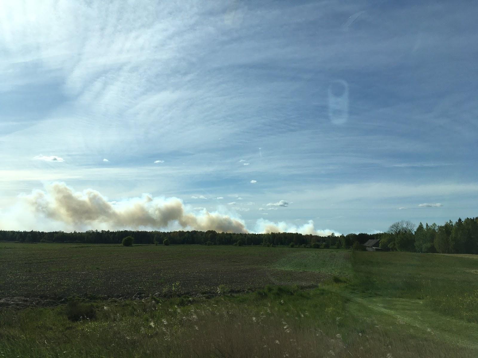 Dūmi no ugunsgrēka ceļas virs meža koku galotnēm