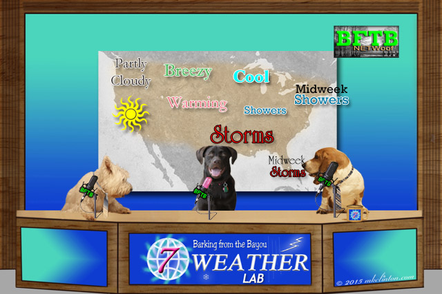 BFTB NETWoof dog Weather with Paisley the Weather Lab