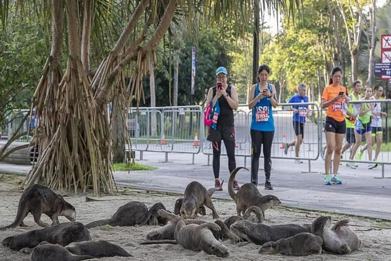 Otters surprise runners at Standard Chartered Singapore Marathon, posted on Wednesday, 12 December 2018