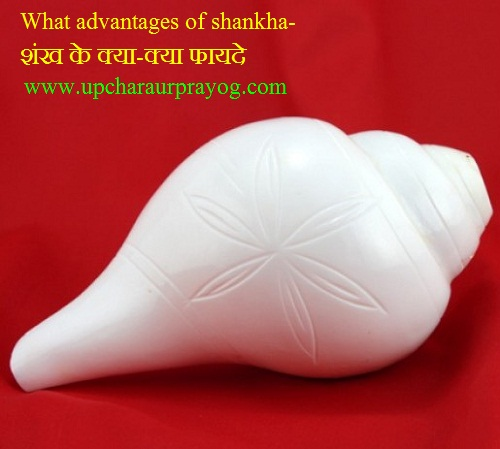 Shankh-शंख के क्या-क्या फायदे