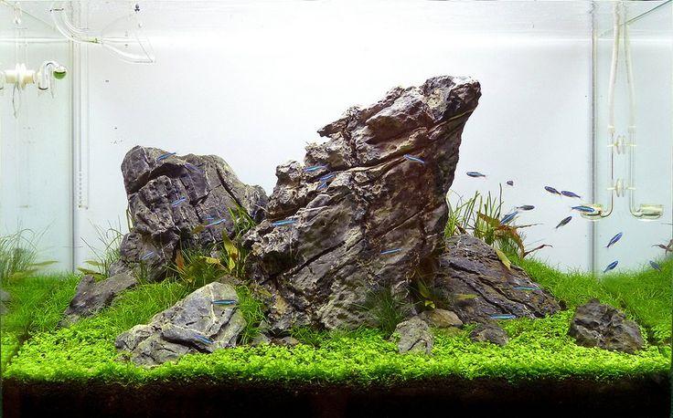 Bể thủy sinh bố cục núi đá đơn giản