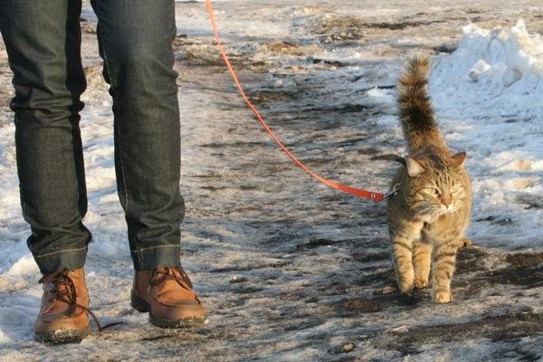 Прогулка с кошкой