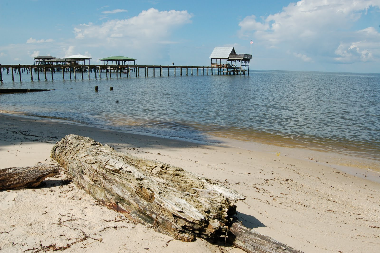 Dead Tree And The Beach Fairhope Alabama