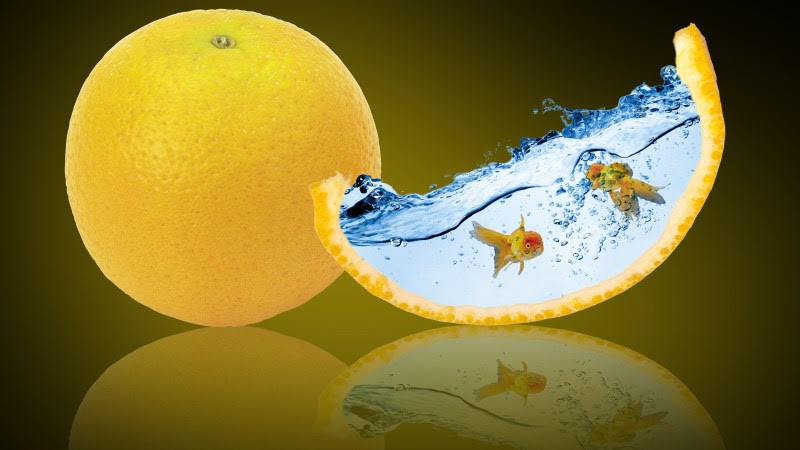 Digital Art with Oranges & Goldfish