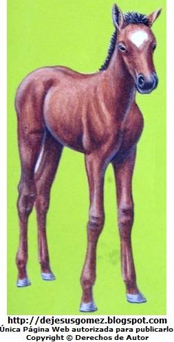 Caballo pequeño (Potro o potrillo). Dibujo de un caballo de Jesus Gómez