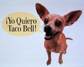 taco bell chihuahua name pre trump rally interviews and live stream with crowd in 1497