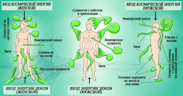 Энергетические паразиты вокруг нас. Единственным способом защиты праны является…