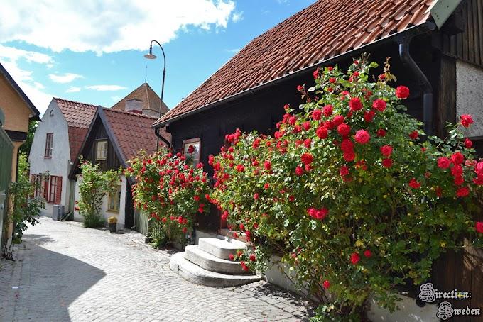 Wśród kwiatów w Visby