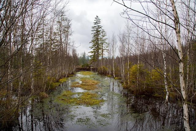 Auf vergessenen Wegen von Finsterau nach Buchwald  Wandern im Bayerischen Wald  Wanderung Nationalpark Bayerischer Wald 03